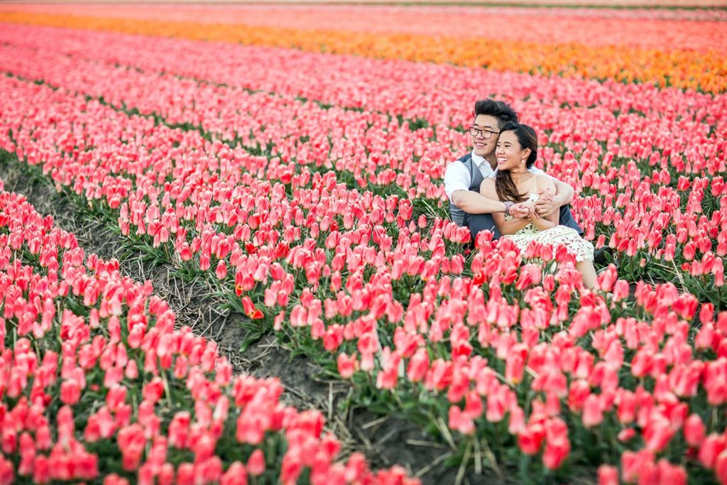 Tulip gardens prewedding Holland